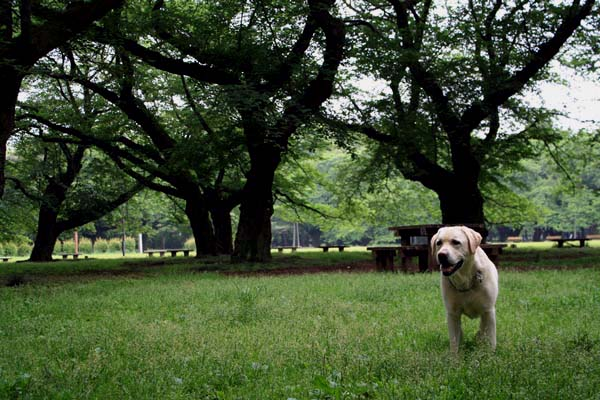 桜の園は、今は緑の園ですぅ。