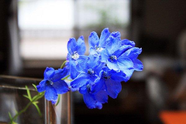 キッチンからお花とリビングが見えます。