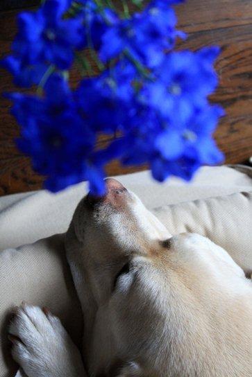 ぼくは、お花には、ぜんぜんー!ですよ。