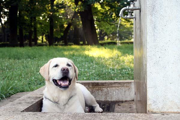 お水出してくださーい!