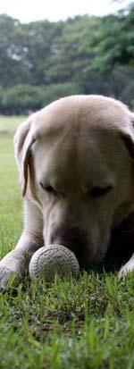 ボールあるのに、遊んでもらえません・・・。