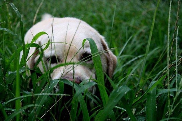 雨ぶぶぶ~♪シュッとした草ですよ。あかちんさん。