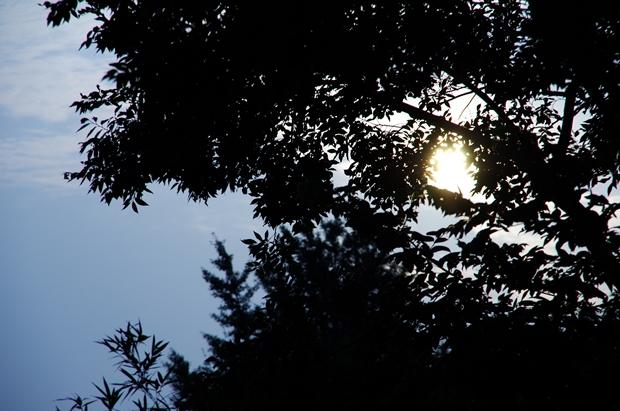 逆光の、すぱーっとした写真が撮りたいもんだ。