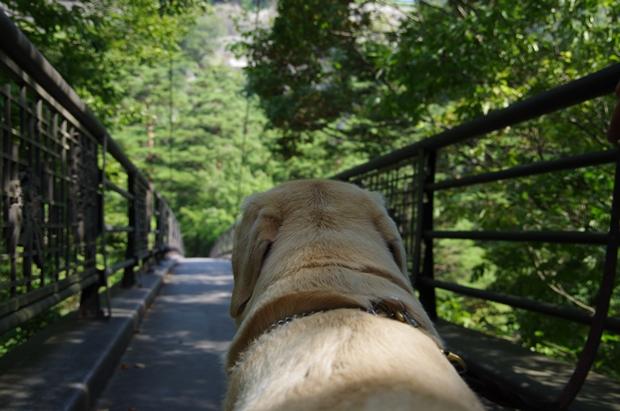 橋は怖いですぅぅぅ。