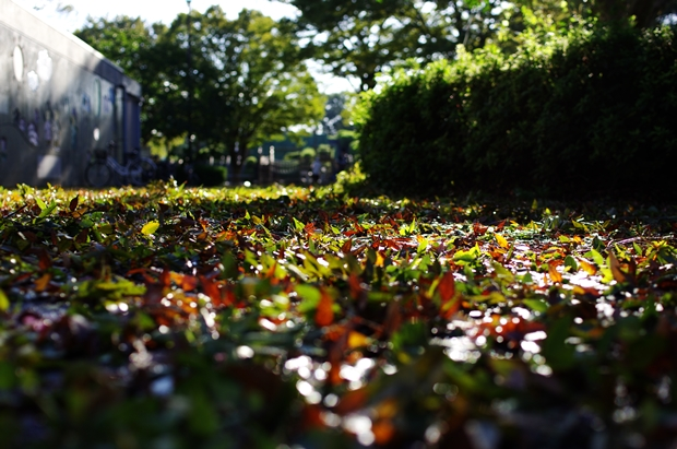 葉っぱだらけ~。