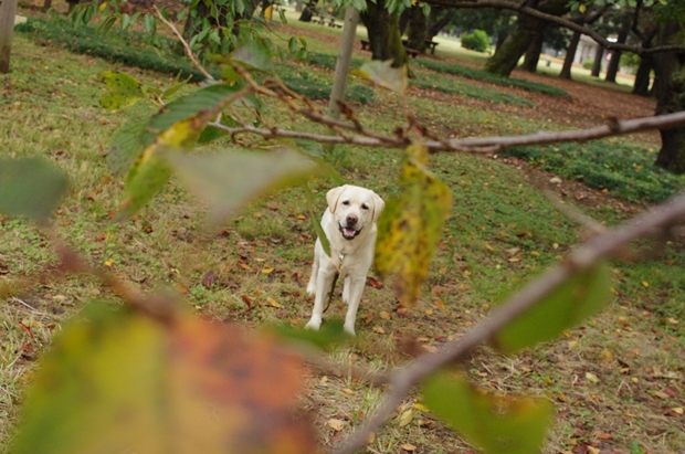 ajiko~、葉っぱは、食べられませんよー。