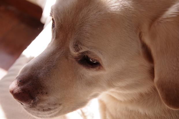 何か考えているようで、何も考えていない犬。