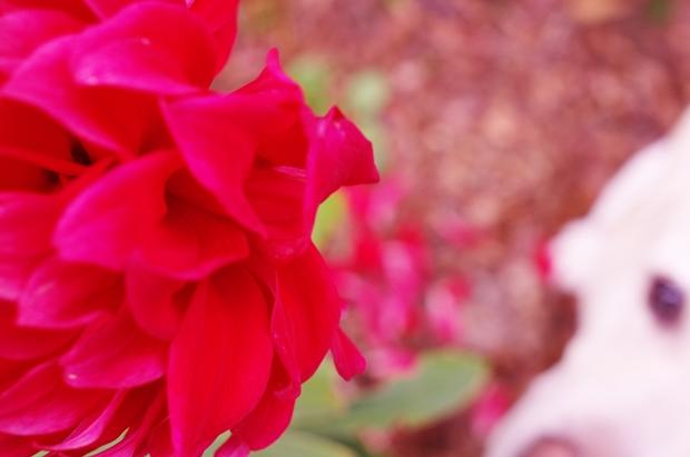 花びらが落ちている所をとりたいんだよ。ぱーくんよ。