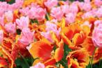 ピンクとオレンジ~。