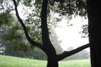 公園。曇りですね。