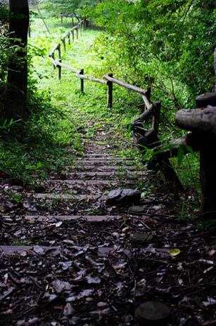 山を下りていく道。