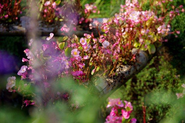 水路に咲く花。