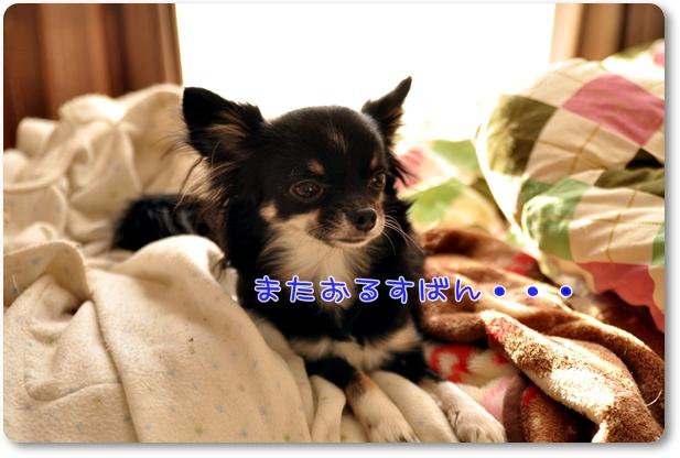 001_20100127190838.jpg