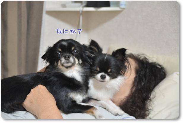 002_20091112212844.jpg
