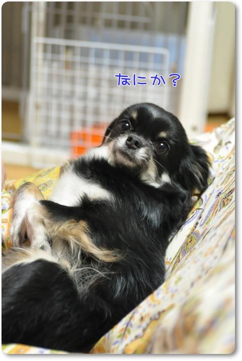 003_20100325223533.jpg