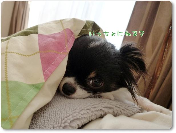 005_20100108010943.jpg