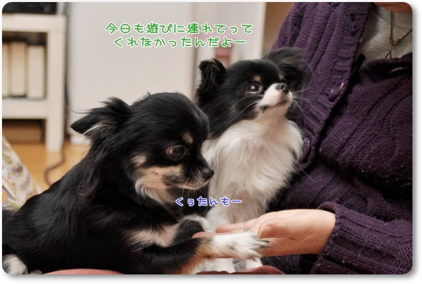 101_20100114204132.jpg