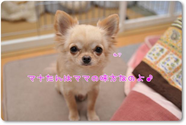 121_20100114204132.jpg