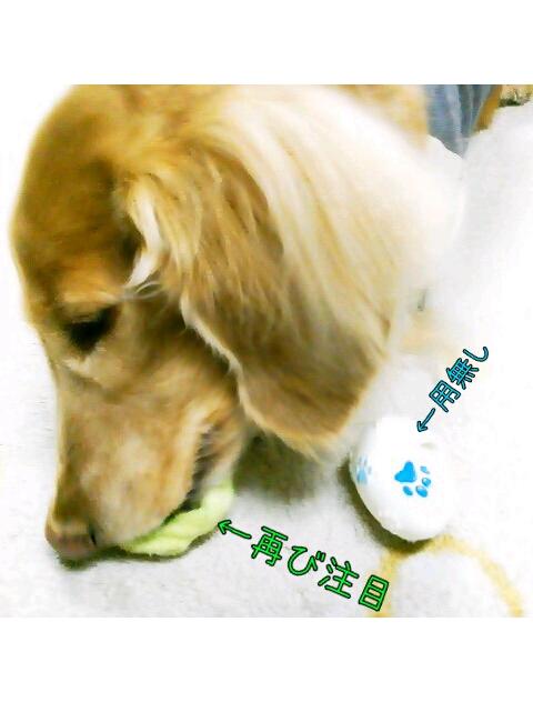 yurumojiCamera_20130222003720.png