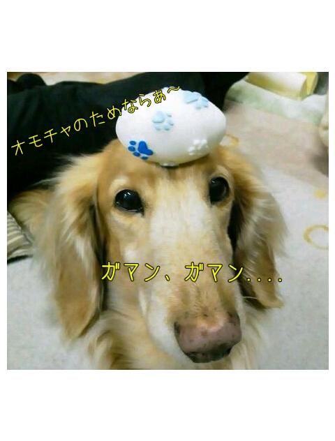 yurumojiCamera_20130222004443.png