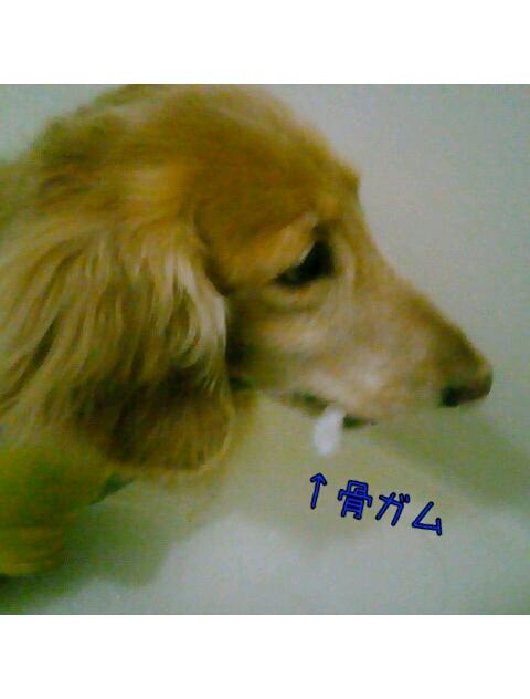 yurumojiCamera_20130303180244.png