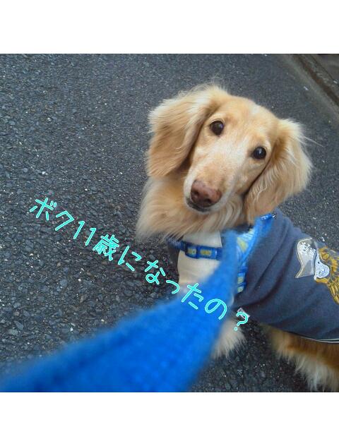 yurumojiCamera_20130323042210.png