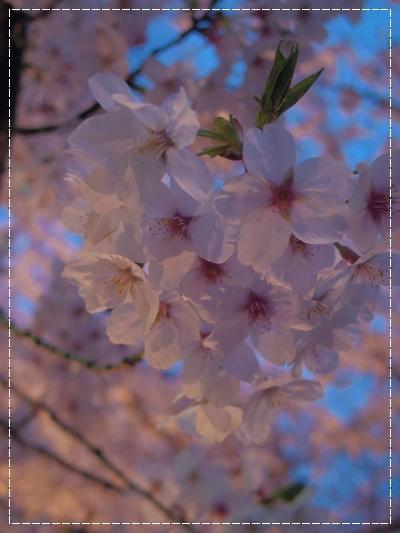 20120409_4.jpg