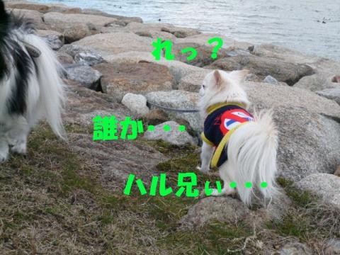 P1050469.jpg