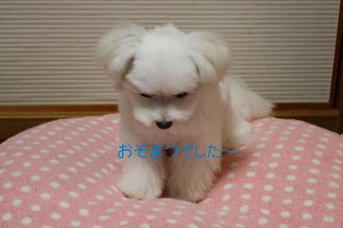 034_convert_20101117205000.jpg
