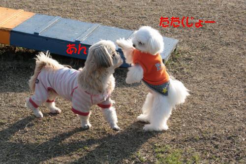 069_convert_20101219190346.jpg