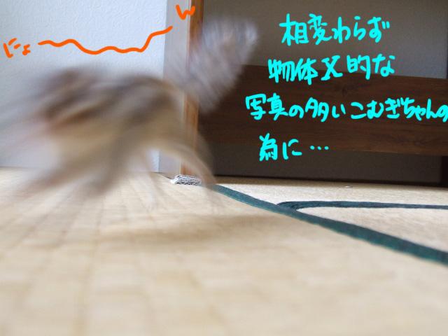DSCF100318a3703.jpg