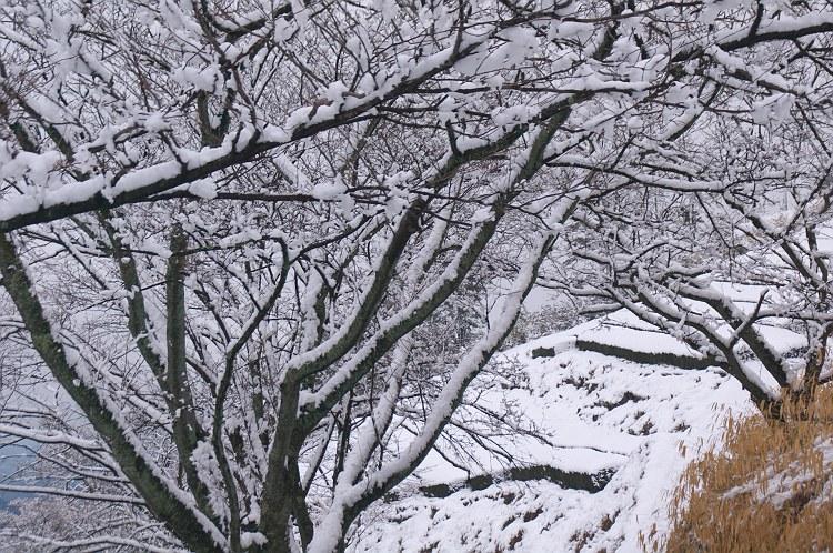 粟ヶ岳雪景色 2