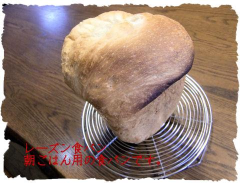 コラーゲン入りの食パンです~~~効果はあるのか?