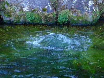 湧き出る水