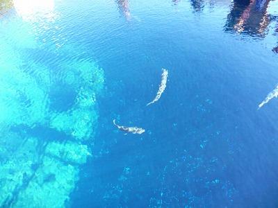 水の透明感がすごい!