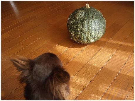 2009-10-18-45.jpg