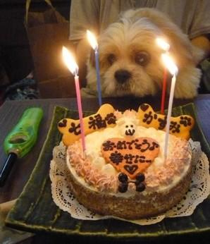 しーケーキ