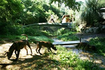 osaka-creek.jpg