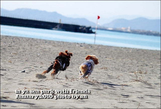 20100130_4165.jpg