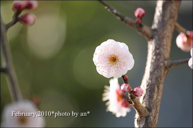 20100200_4771.jpg