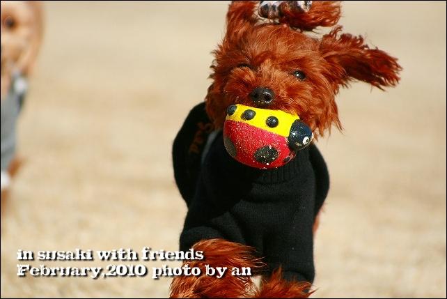 20100206_7388.jpg