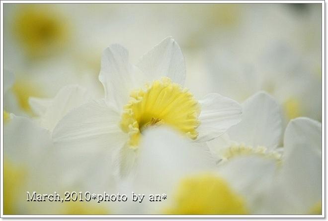 20100305_5917.jpg