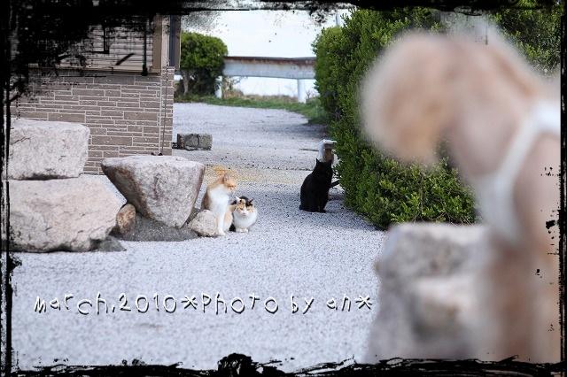 20100310_6481.jpg
