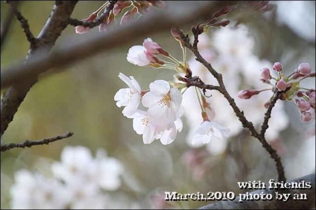20100322_7632.jpg
