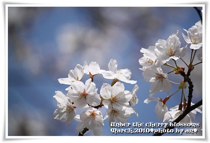20100327_8034.jpg