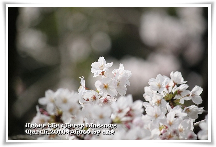 20100327_8215.jpg