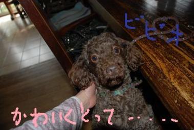 DSC_0329_20110325112231.jpg