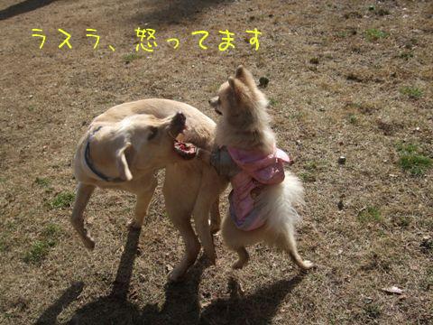 2010_02135gatu0021.jpg