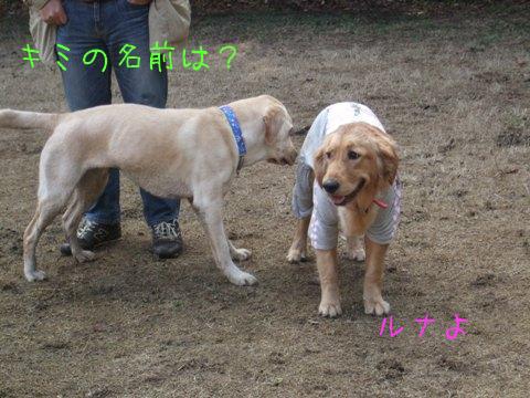 2010_02135gatu0043.jpg