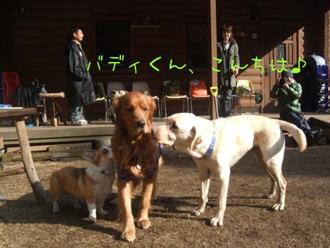 2010_02135gatu0060.jpg